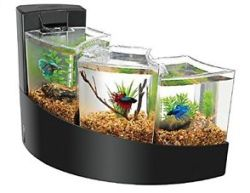 Aqueon Betta Fish Tank