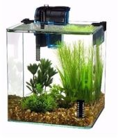 Betta Fish Aquarium