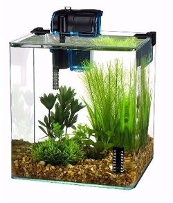 Penn Plax Betta Fish Aquarium