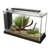 Small Desk Aquarium
